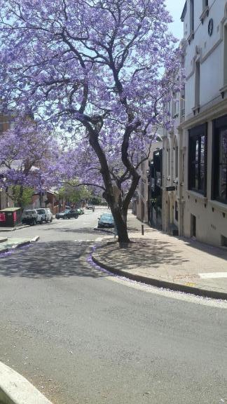 jacaranda-5-november-2016-riley-street